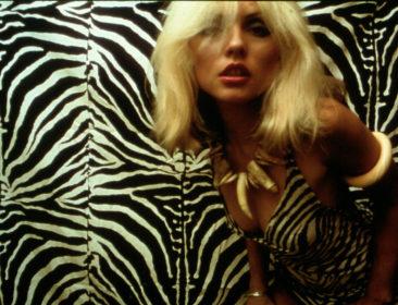 Logeren Bij Lou – Shampoo voor Blondie