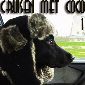 Cruisen met Coco 1 (hond uit raam)
